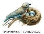 Bird On A Nest With Eggs On A...