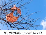 remains of a burned flying... | Shutterstock . vector #1298262715