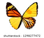 Stock photo colorful butterfly isolated on white background 1298277472