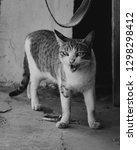 Small photo of Defense Mechanism Cat