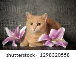 red cat on a gray background... | Shutterstock . vector #1298320558
