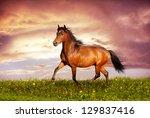 Beautiful Brown Horse Running...