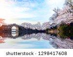 Asia China wuxi yuantouzhu park beautiful sakura scenery