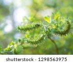 handsome metallic  glowing... | Shutterstock . vector #1298563975
