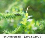 handsome metallic  glowing... | Shutterstock . vector #1298563978