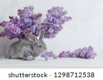 Easter Rabbit With Lilac In...