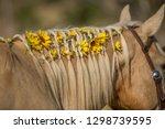 flowers braided in horse mane | Shutterstock . vector #1298739595