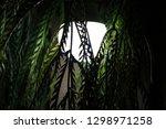 watcher in the night | Shutterstock . vector #1298971258