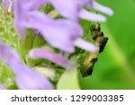 Jagged Ambush Bug On Wildflower ...