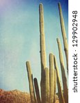 Desert Cactus With An Artistic...