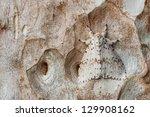 White Moth Hiding On Tree Bark