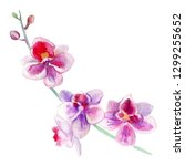 Orchid Flowers Watercolor Hand...