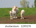 cow with two calf | Shutterstock . vector #1299270