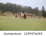 beautiful horses equine | Shutterstock . vector #1299376495