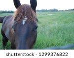 beautiful horses equine | Shutterstock . vector #1299376822