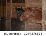 beautiful horses equine | Shutterstock . vector #1299376915