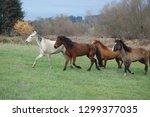 beautiful horses equine | Shutterstock . vector #1299377035