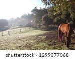 beautiful horses equine | Shutterstock . vector #1299377068