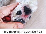 hands touch on the feet of... | Shutterstock . vector #1299535405