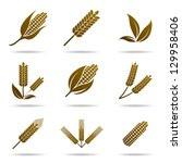 wheat and rye. elements for... | Shutterstock .eps vector #129958406