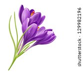 Vector Spring Flowers Isolated...
