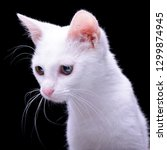 Stock photo portrait of an adorable domestic cat isolated on black background 1299874945
