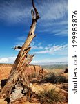 dry tree in colorado monument | Shutterstock . vector #129989876