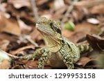 close up of an eastern water...   Shutterstock . vector #1299953158