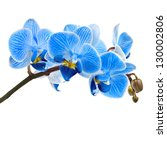 Beautiful Flower Orchid  Blue...