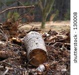 tree cut down | Shutterstock . vector #130008