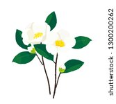 white christmas camellias.... | Shutterstock .eps vector #1300200262