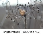 ellow birch leaf in grey... | Shutterstock . vector #1300455712