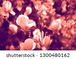 duotone effect coral and... | Shutterstock . vector #1300480162