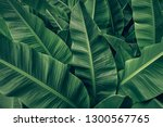 Tropical banana palm leaves...