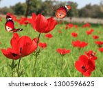 Red Wild Flowers Blossom....