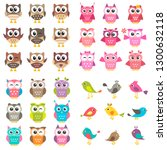 Set of different kinds of birds and owls
