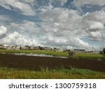 rice field in the suburb of... | Shutterstock . vector #1300759318