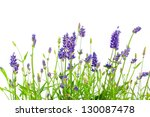 Flower Of Lavender On A White...