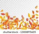 oak  maple  wild ash rowan... | Shutterstock .eps vector #1300895605