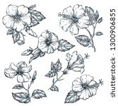 tropical flowers set  vector... | Shutterstock .eps vector #1300906855