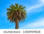 palm tree on the background of... | Shutterstock . vector #1300909828
