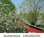 green leaves and cherry flowers ... | Shutterstock . vector #1301002432