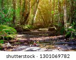 beautiful rainforest with green ... | Shutterstock . vector #1301069782