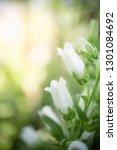 white flower on blurred... | Shutterstock . vector #1301084692