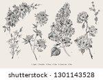 blooming trees. vintage vector... | Shutterstock .eps vector #1301143528