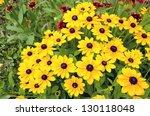 Rudbeckia Flowers In Summer...