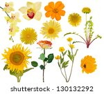 Stock photo set of yellow flowers isolated on white background 130132292