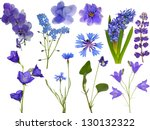 Stock photo set of blue flowers isolated on white background 130132322