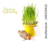Spring green grass in a garden bucket  on a white. - stock photo