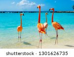 Pink Flamingo On The Beach From ...
